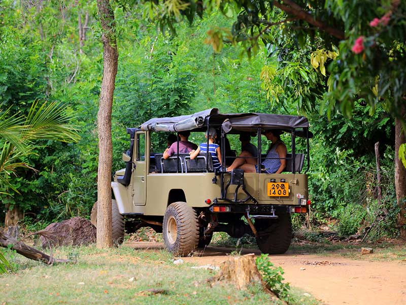 Habarana & Sigiriya culture trip by Jeep, Sigiriya culture trip by Jeep in Sri Lanka, Habarana culture trip by Jeep in Sri Lanka, culture trip by Jeep experience Sri Lanka, Jeep experience Sri Lanka