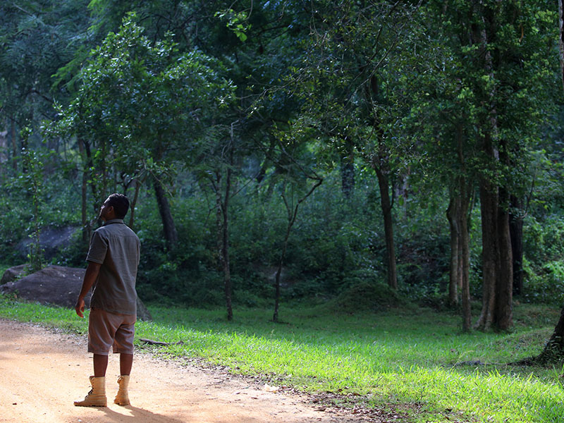 Jungle trekking Tours in Sigiriya, Sigiriya Jungle Tours, Trekking tours in Habarana, Sigiriya jungle trekking tours, Jungle trekking tours in Sri Lanka, Nature walks and nature trails in Sigiriya, Nature trails in Habarana