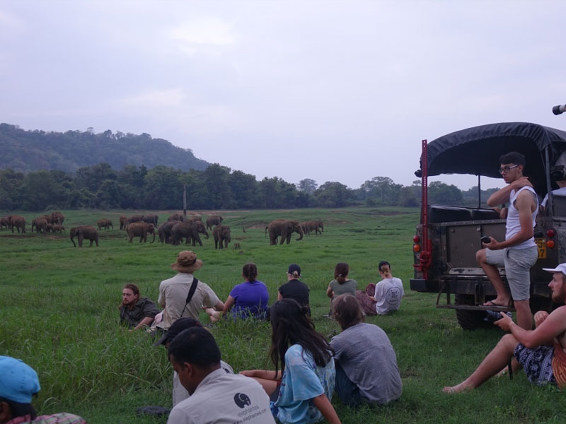 Wild Elephant Observation  in Sri Lanka - Wasgamuwa National park- Conservation Expedition in Wasgamuwa - Elephant Watching in wasgamuwa National Park - Wasgamuwa, Sri Lanka