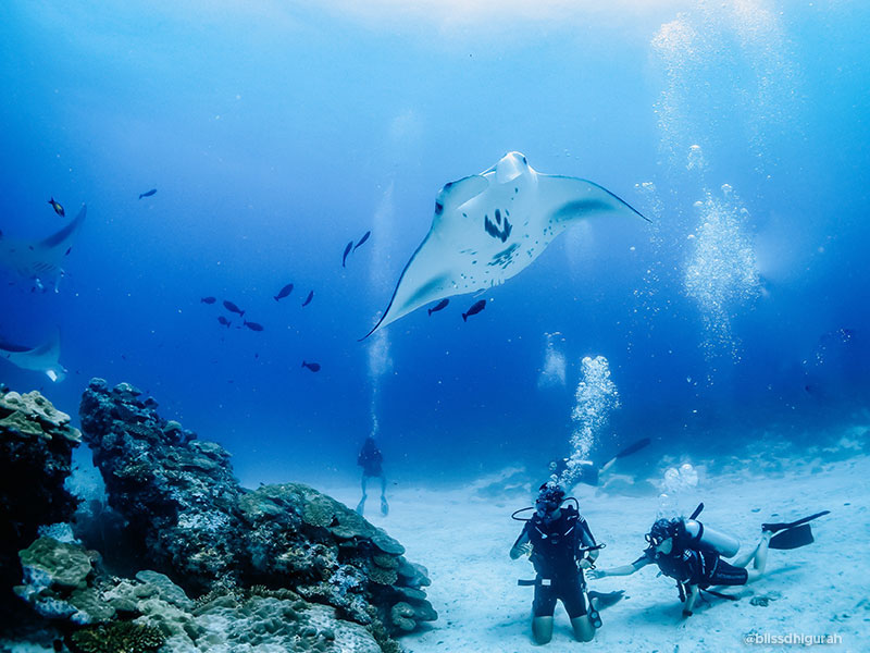 Diving Tours and Guided Diving Holidays in Maldives