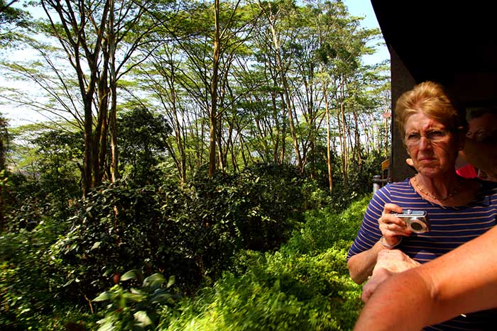 Kandy Ella Scenic train journey, Ella Train journey, Kandy – Haputale train in Sri Lanka, Sri Lanka kandy-ella-haputale train ticket bookings - Scenic train journeys in Sri Lanka, Train Tours in Sri Lanka - Sri Lanka Train Tours - Train Journey in Sri Lanka
